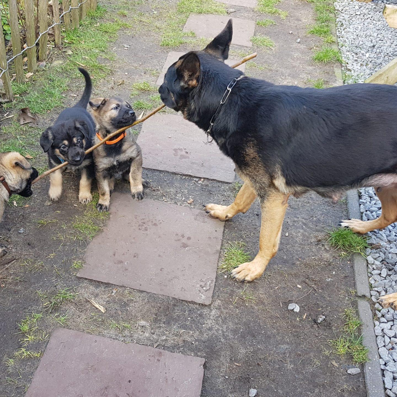Nieuwe pup foto's