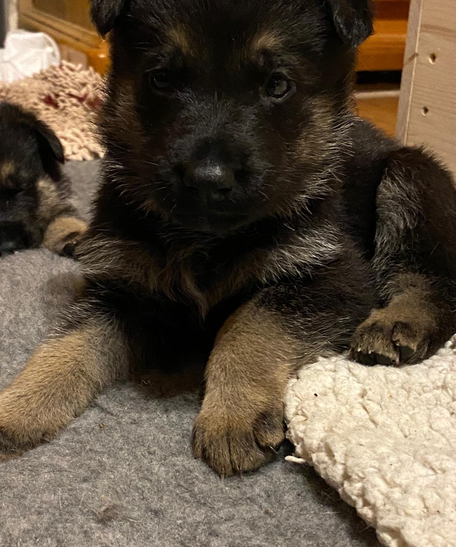 Nieuwe Puppy Foto's!